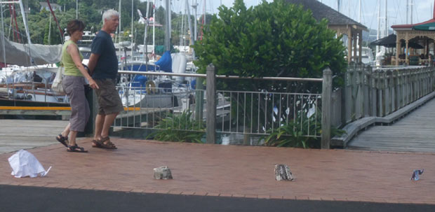 Sonja herds elephants from the Town Basin Pohutakawa tree along the wharf towards the Whangarei art gallery